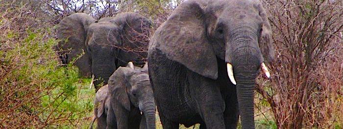 elephantfamily11